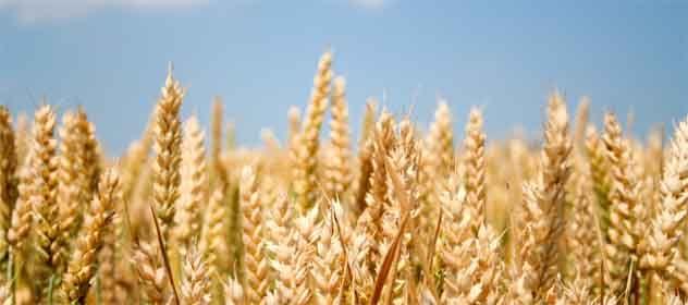 Czy-zostanie-wprowadzony-zakaz-upraw-GMO