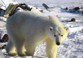 Arctic Frontiers 2015