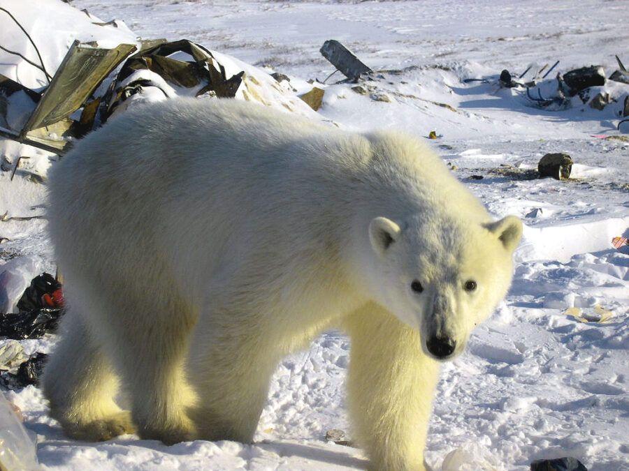 Arctic-Frontiers-2015